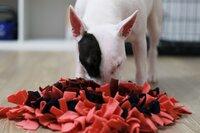 Uostymo kilimėlis šunims, 30x33 cm