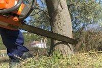 Medžių, šakų, krūmų pjovimas, išvežimas